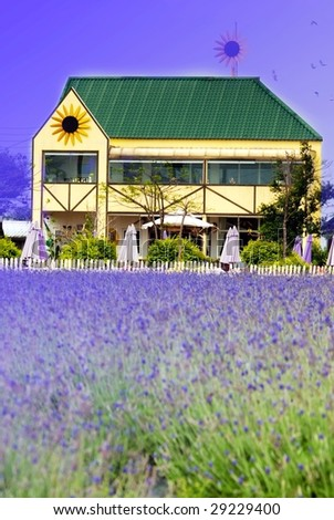 Lavender garden fill with lavender style color