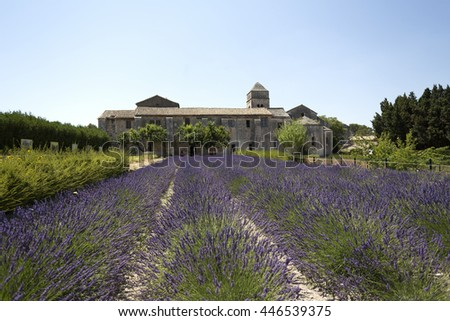 Lavender Garden Of The Hospital In Arles