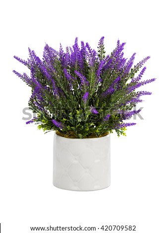 Lavender in vase isolated on white background - stock photo