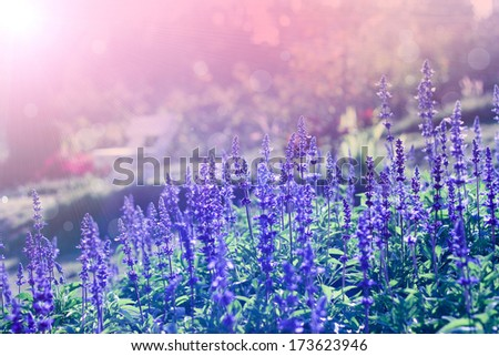 lavender over  background