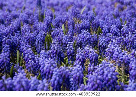 lavender purple flowers greens background photo