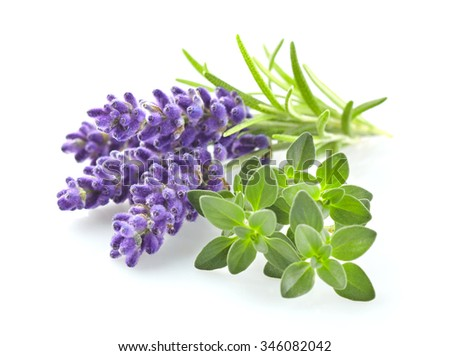 Lavender with thyme - stock photo