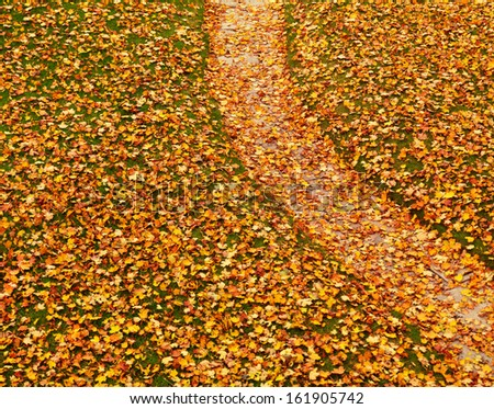 Lawn and a path covered with fallen yellow autumn maple leaves artistic background - stock photo