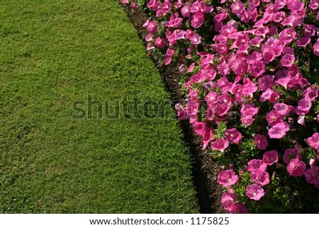 lawn and flowers - stock photo