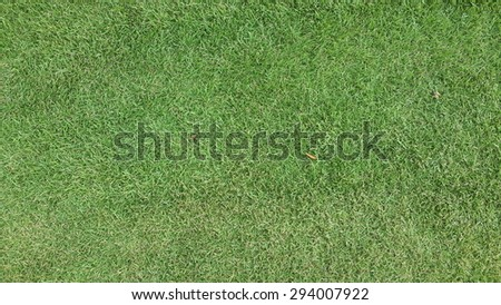 lawn grass background green wall wallpaper tiring field nature texture line summer cut pitch outdoor lush  - stock photo