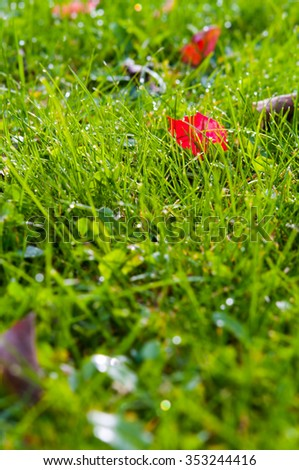 Lawn grass with dew drops and leaves in the morning - stock photo