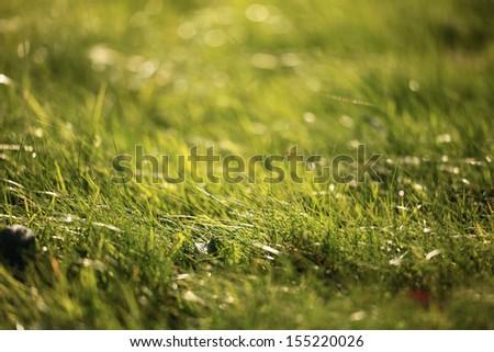 lawn, green grass - stock photo