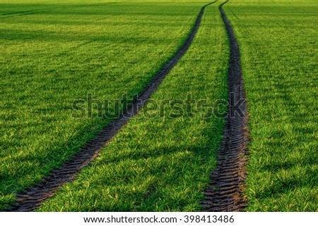 Lawn in the park  - stock photo