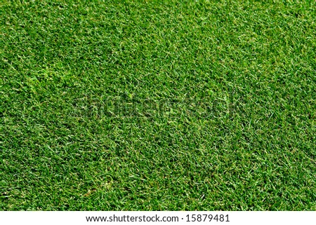 Lawn texture detail - stock photo