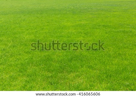 lawn with new green grass - stock photo