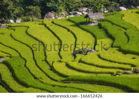 Layers of rice paddies across the mountains of Sapa, Vietnam