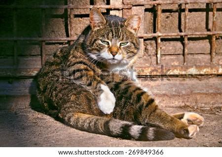 lazy cat - stock photo
