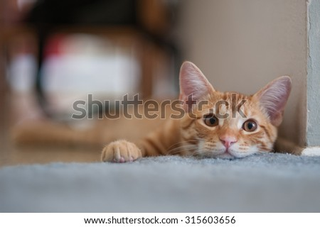 Lazy comfort keeps this kitty lying down. shallow dof - stock photo