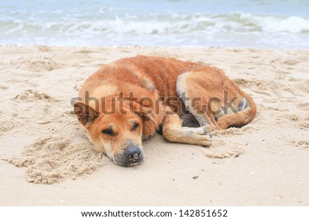 Dog Relaxing On Beach