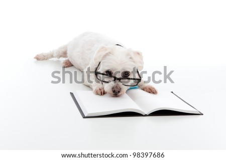 Lazy dog wearing reading glasses, head resting on an open book or textbook.  White background. - stock photo