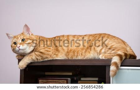 Lazy orange cat sleeping on the bookcase - stock photo