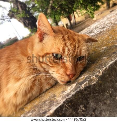 Lazy, sleepy cat lie on concrete. - stock photo