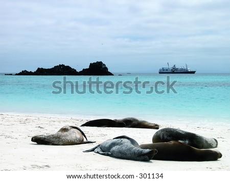 Lazy sunbathers - stock photo