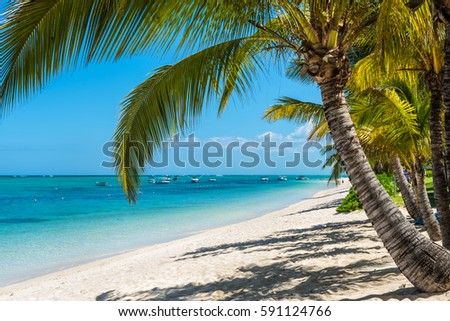 Coconut palm tree on sea beach stock photo 316506656 for Tropical getaways in december