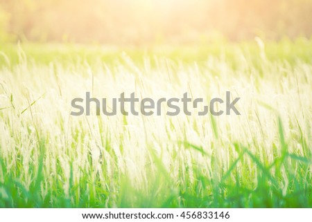 Lea White.Meadow among white sun in the morning. - stock photo