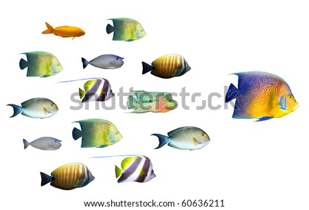 Leadership concept - big fish leading school of tropical fishes isolated on white - stock photo