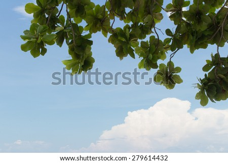 leaf and blue sky background - stock photo