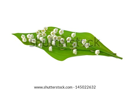 Leaf and flowers of Lily of the Valley - stock photo