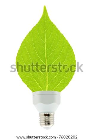leaf and lamp