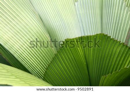 Leaf - Botanical Gardens, Singapore - stock photo
