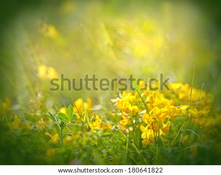 Leaf clover in focus - stock photo