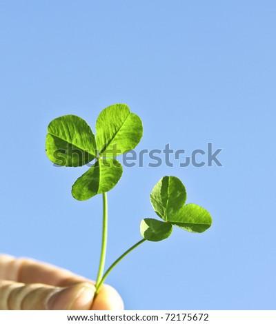 Leaf clovers on a background blue sky - stock photo