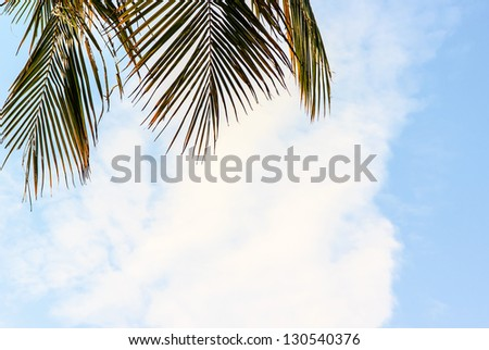 Leaf coconut tree and sky in summer season - stock photo