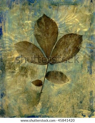 Leaf collage of a single stem with a group of leaves. - stock photo