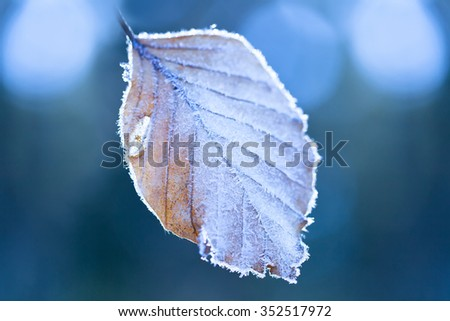 Leaf covered frost - stock photo