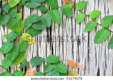 Leaf-covered old wood. - stock photo