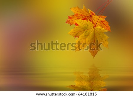 Leaf fallen from a tree in the water - stock photo