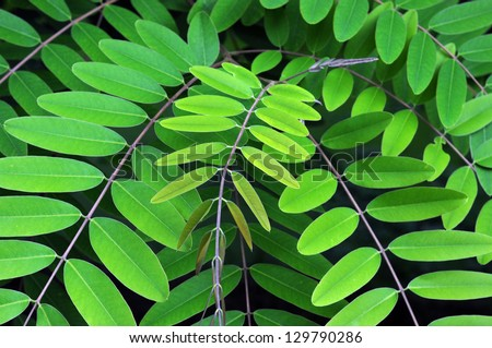 leaf green - stock photo