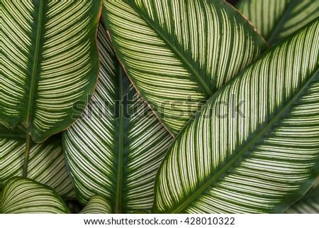 Leaf green background - stock photo