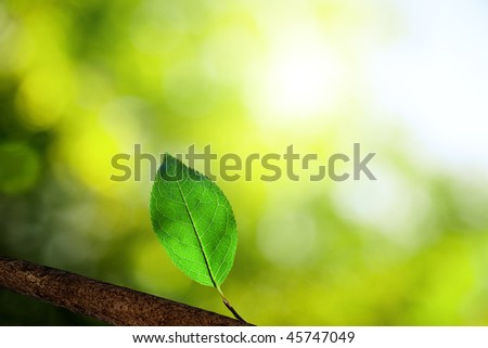 leaf in deep forest
