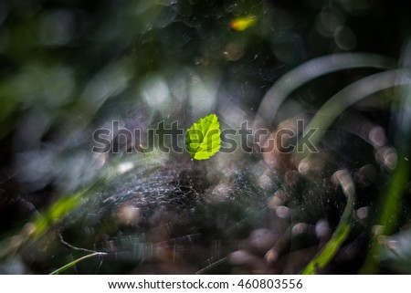 Leaf in spider web