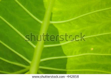 Leaf in the Park - stock photo