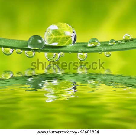 leaf in water drops - stock photo