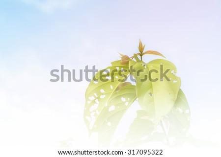 Leaf insect a bite to eat with sky background - stock photo
