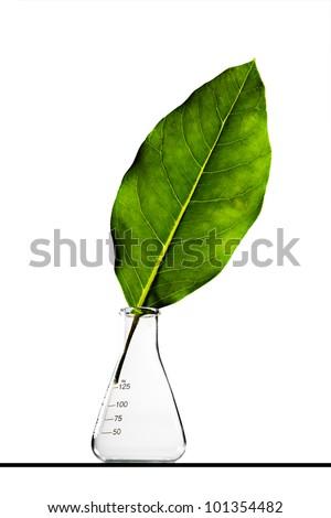 Leaf inside a flask - stock photo