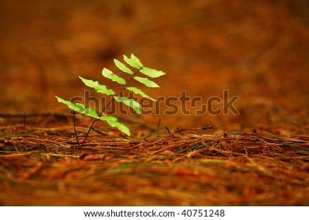 Leaf isolated in the forest - stock photo