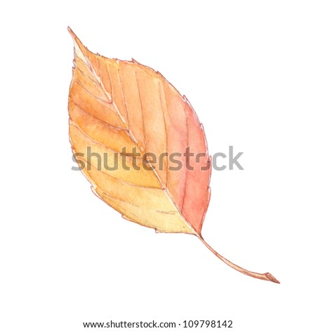 leaf isolated on white background. watercolor illustration - stock photo