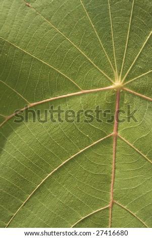 leaf macro background - stock photo