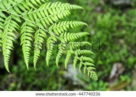 Leaf of fern tree with blurred background of the forest. - stock photo