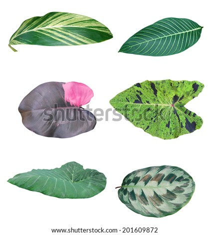 Leaf of green houseplants,  environment tree - stock photo