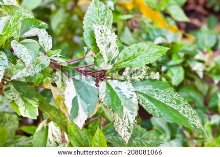 leaf of plant in garden - stock photo